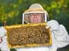 beekeeper-35-cover-crop