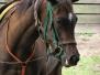 Backyard Racehorse of Rancho Del Castillo