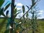 Green Leaf Sod Farm