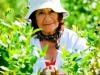 dsc02676-mixon-farms-blueberry-harvest-253x449