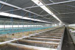 Urban Tropical Fish Farm