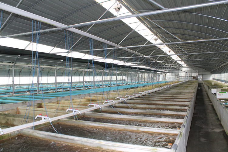 Urban tropical fish farm central florida ag newscentral for Fish farms in florida