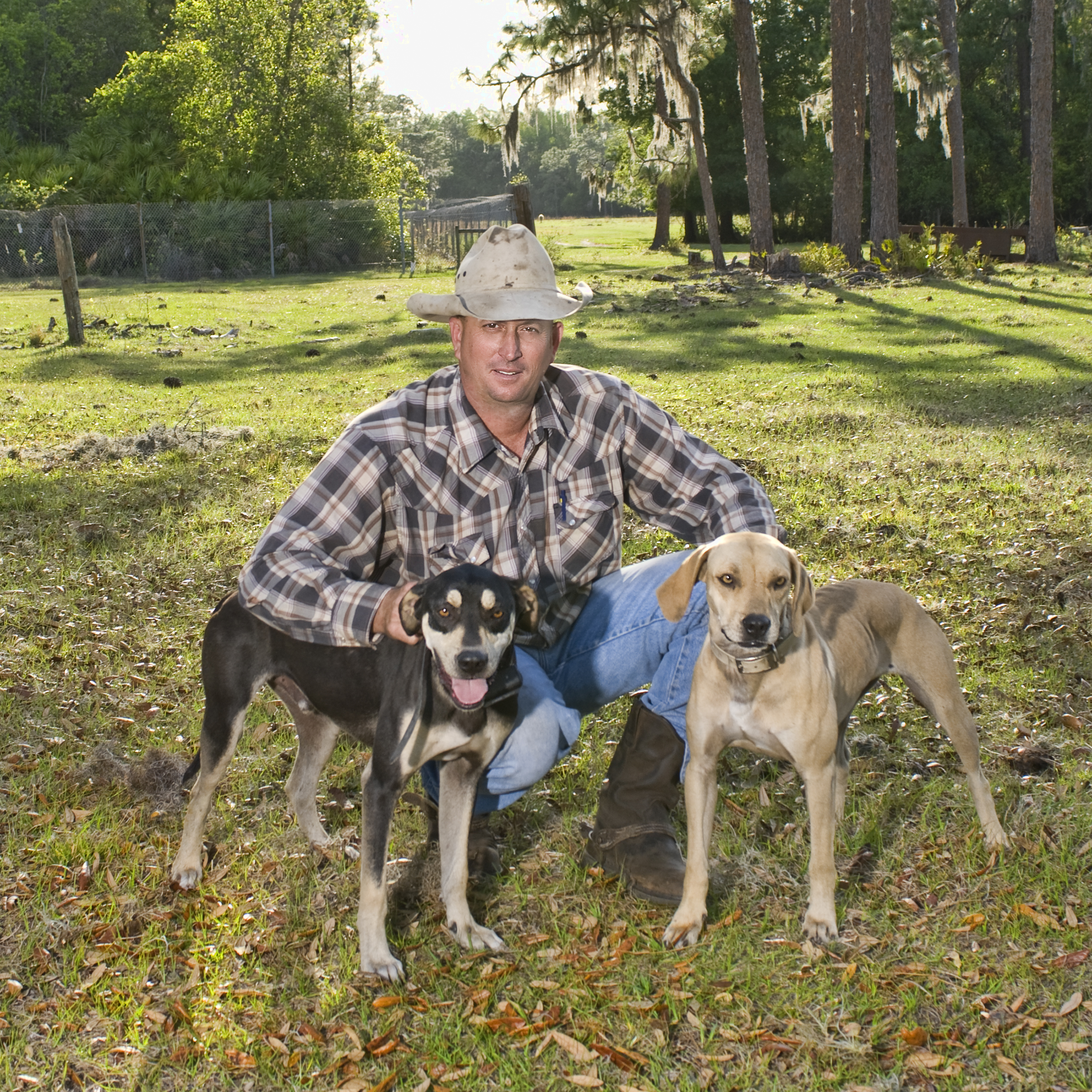 Trained Working Cattle Dogs For Sale