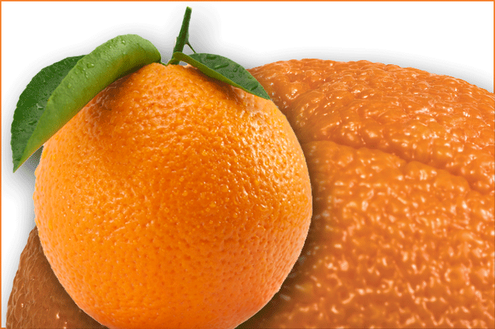 What Do Genetically Modified Citrus Trees Mean For The Florida