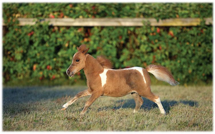 Equines of the dwarf kind - Central Florida Ag NewsCentral ...