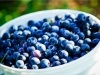 dsc02701-mixon-farms-blueberry-harvest-600x337