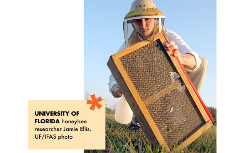 @griTech: Colony Collapse Disorder causing concern for apiaries