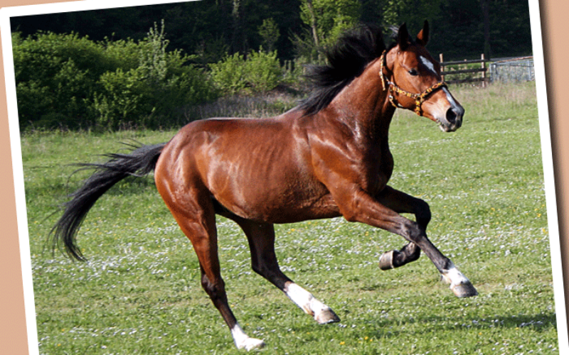 DOs and DON'Ts for when your horse gets startled