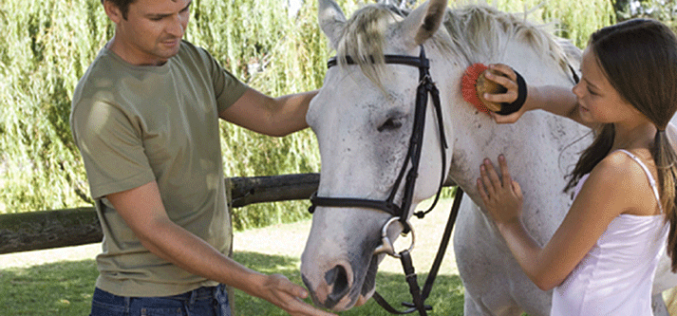 Grooming safety for new horse owners