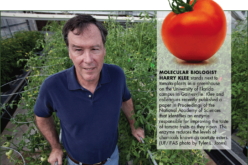 @griTech … Florida Tomatoes: Searching for Answers