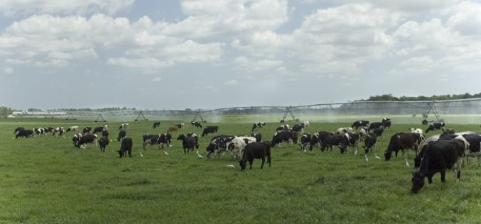 More Trade Opportunity for Florida Beef