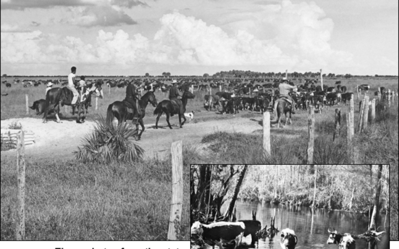 A brief look at Florida's oldest industry — cattle ranching