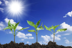 Commissioner's AgriCorner: Planting the seeds for growth in the Florida ag industry