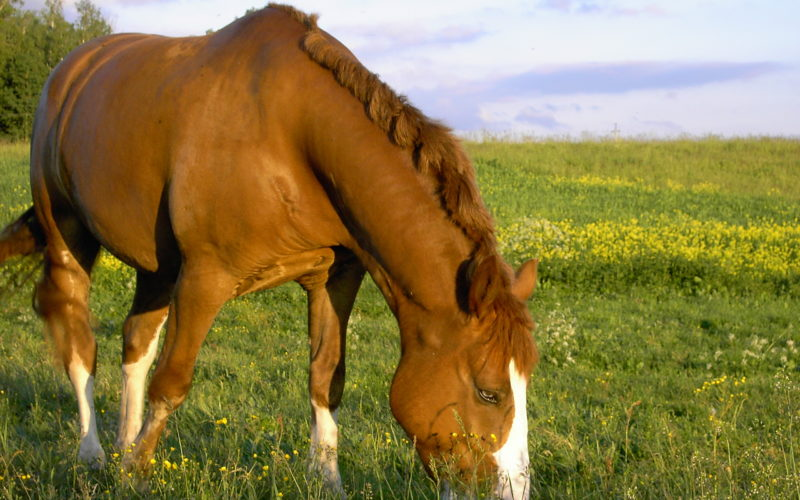 Helping horses with a troubled past