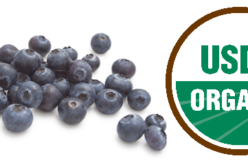 Harvest time: Organic blueberry growers battle odds in niche market