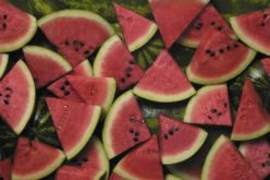 Harvest Time: Slicing Watermelon Fact from Fiction