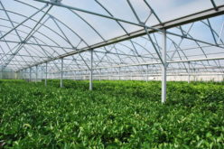 Greenhouses, Hoophouses, and Hydroponics, OH MY!