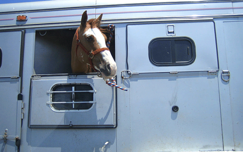 Travelin' with your equine