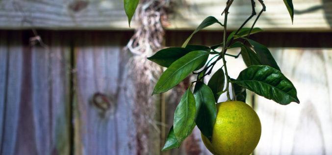 Commissioner's AgriCorner: 'My Florida Farm Weather' App