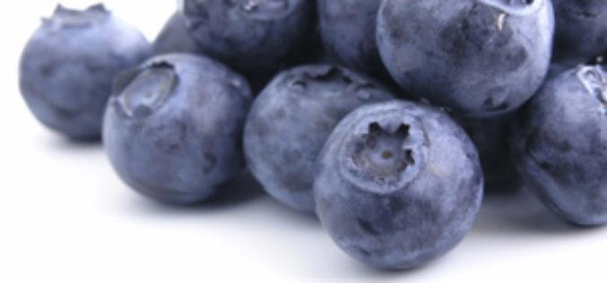 Florida Blueberries on TV!