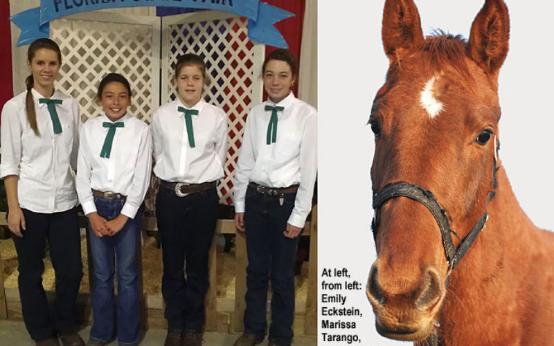 Learning new equine skills through competition