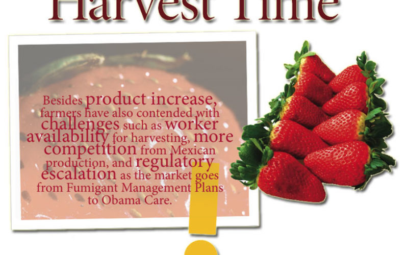 Strawberry Growers are Seeing Red this Season