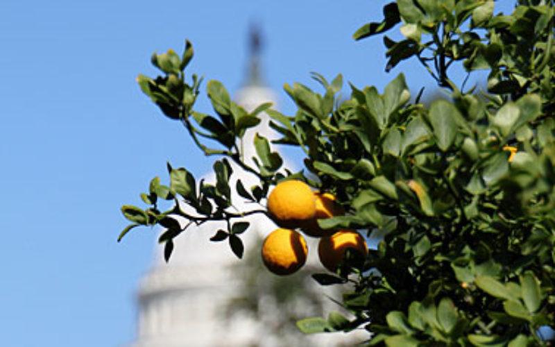 2013 Legislature Concerns for Agricluture
