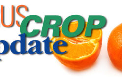 Citrus Crop Update: USDA Predicts Slimmer Harvest for Valencia Variety