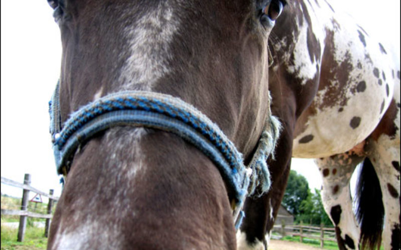 The 'Neigh'-ing Truth: What Your Horse is Telling You