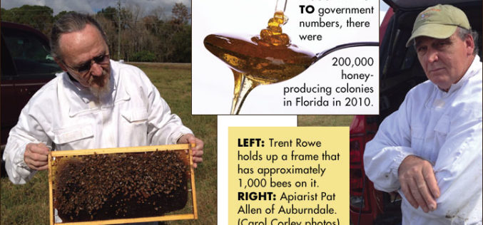 Recipe Spotlight: How Local Apiarists Like to Eat Their Honey