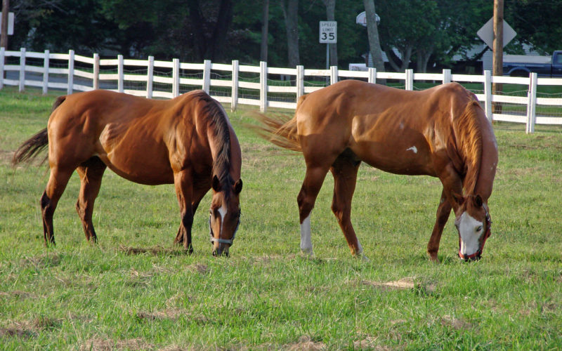 A House a Horse Can Call Home