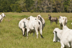 Florida Ranching by the Numbers