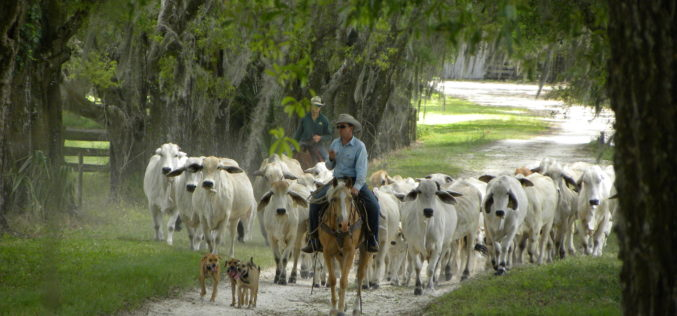 Riding Through Life on a Trusted Breed
