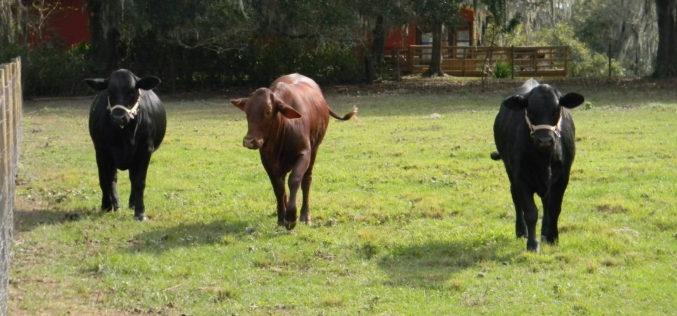 Live. Love. Livestock.