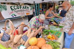 Recipe Spotlight: How to cook like a pro with food from your farmers' market