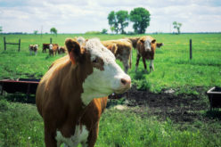 Final Florida Cattle ID Rule kicks in