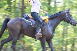 Top health concerns for endurance riding
