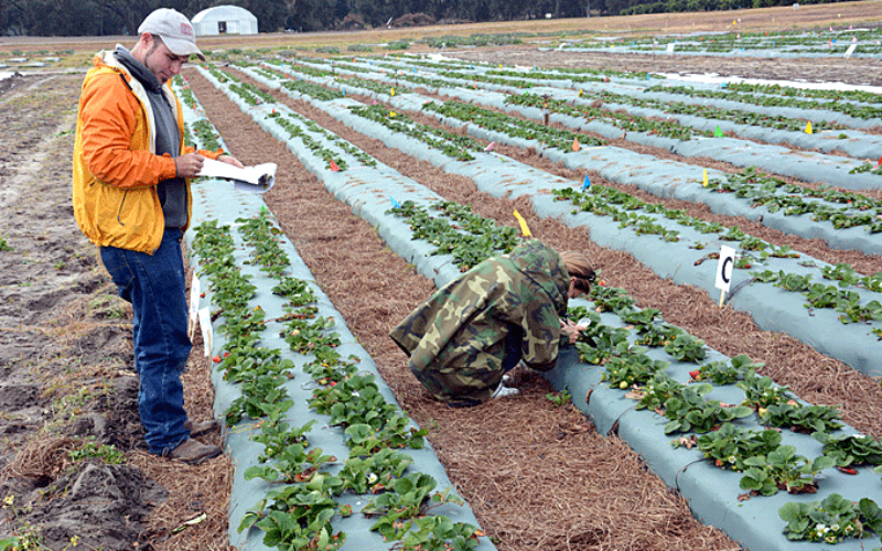 Developing and disseminating technologies for ag
