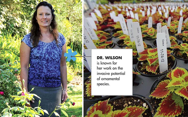 Meet Dr. Sandy Wilson of UF/IFAS