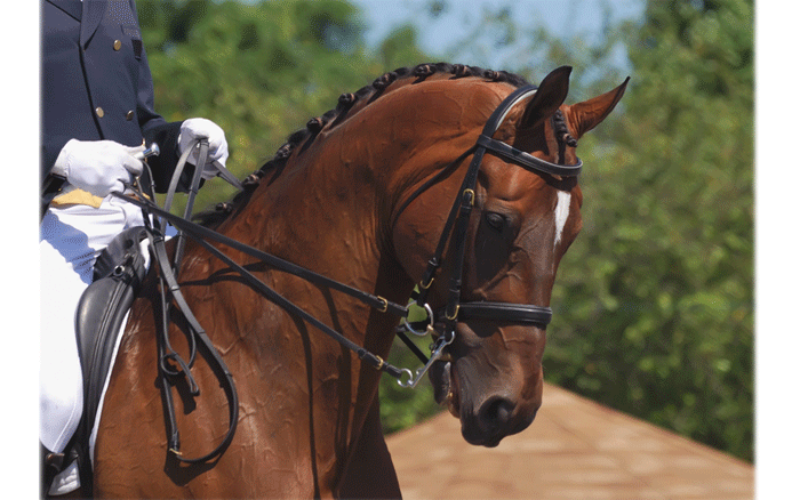 An expo for the equine lover