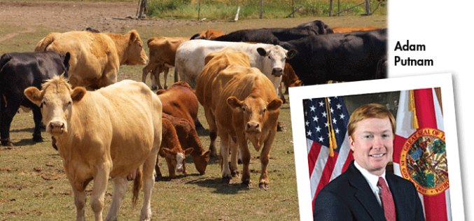 Commissioner's AgriCorner: Strengthening Florida's livestock industry