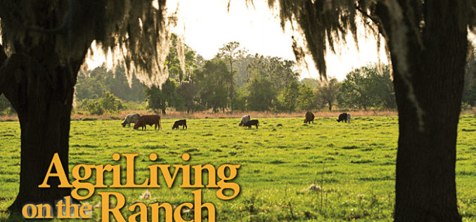 It's a good time to be a cattleman in Florida