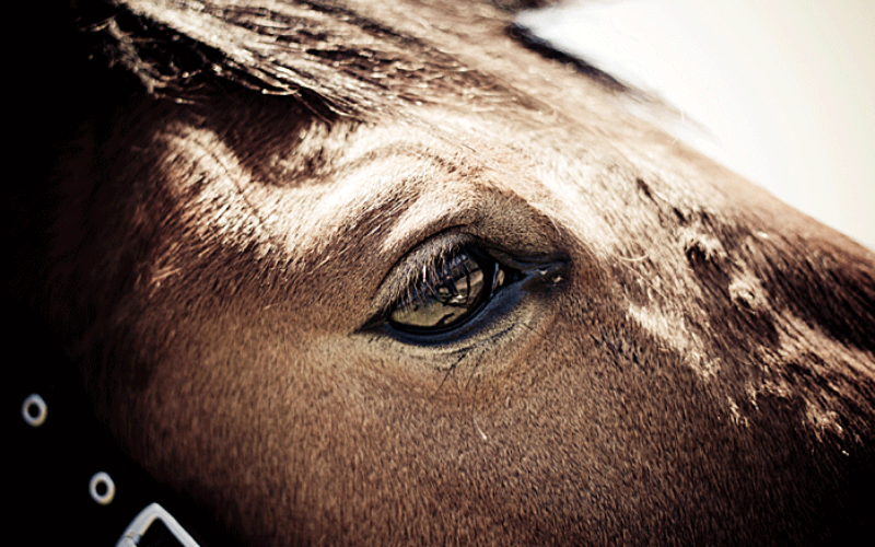 Warning signs of heat stress in horses