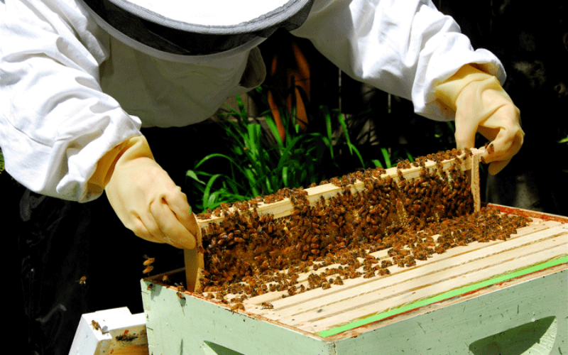 Agribiz: Beekeepers learn the value of stings