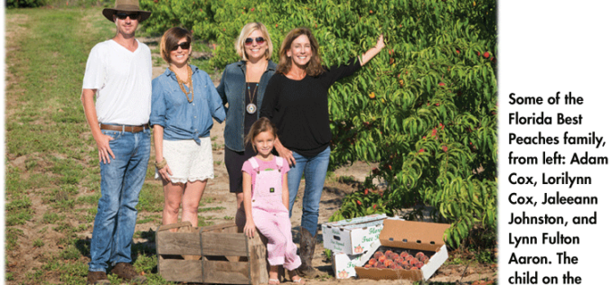 Orchard update: A growing alternative crop in the Sunshine State