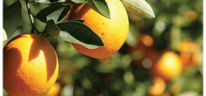 Industry reactions on the latest citrus crop estimate