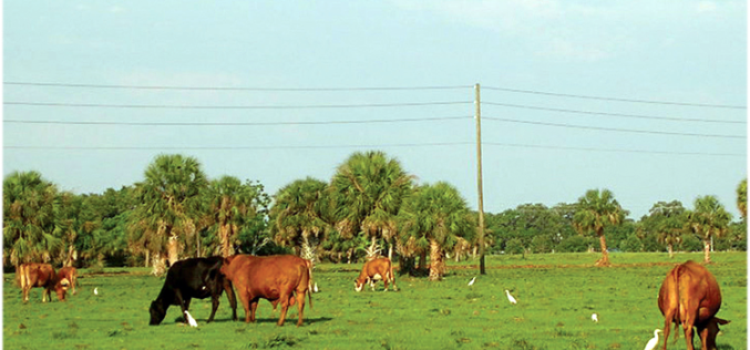 Proposed cattle grazing in state parks