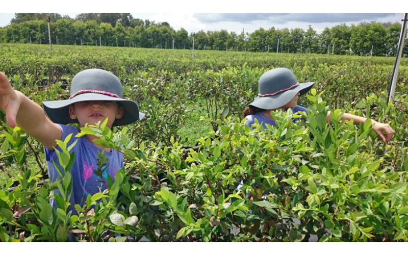 From the Editor's Desk: Do you teach your kids agriculture?