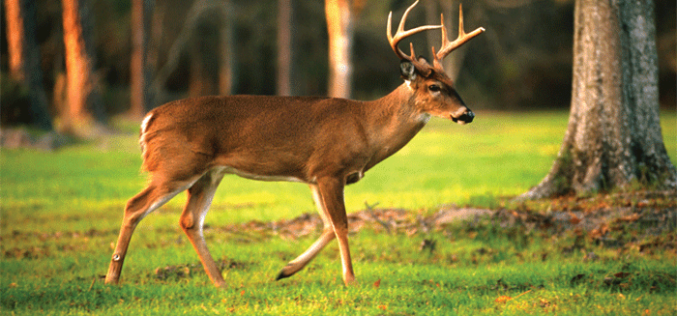 Q&A on hunting wild game