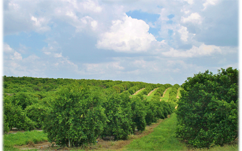 2015-16 Citrus Forecast: Experts take a look down the path of this year's harvest season